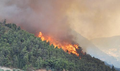 incendiu-padure-oas