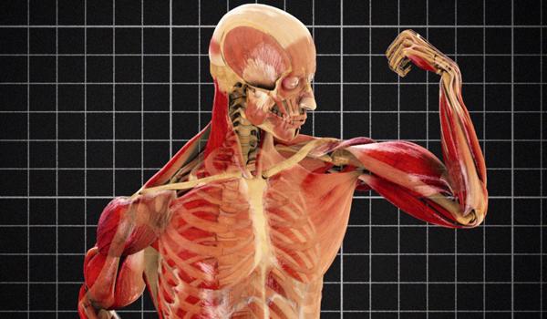 corpul complet al corpului subțire)