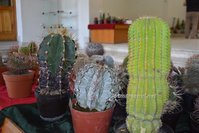 cactusi13