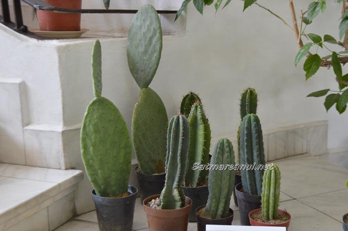 cactusi24