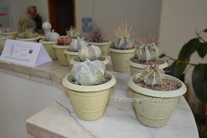 cactusi25