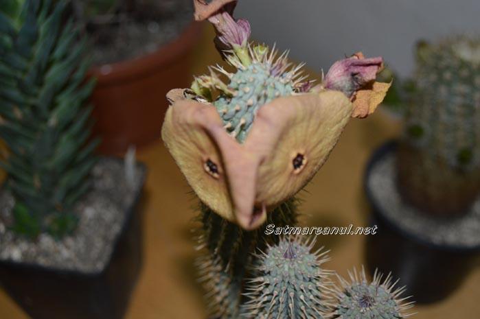 cactusi31