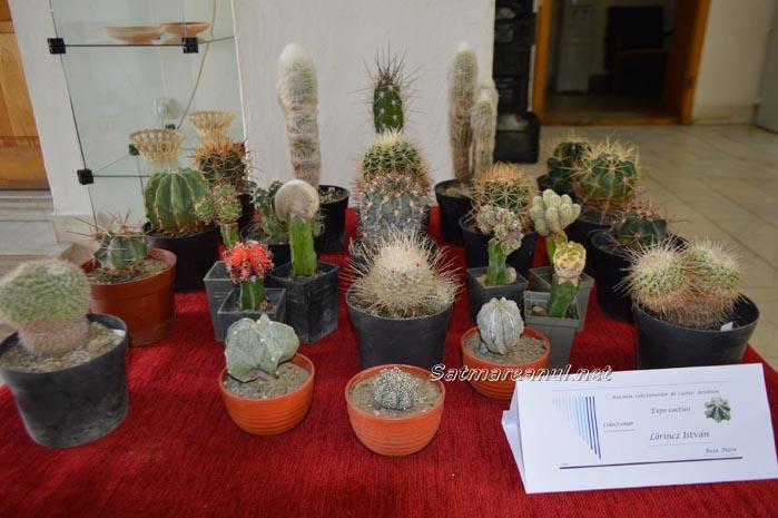 cactusi33
