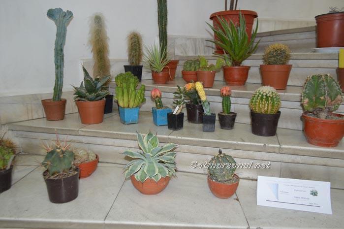 cactusi34