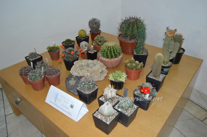 cactusi35