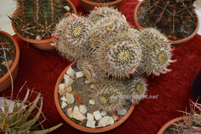 cactusi4