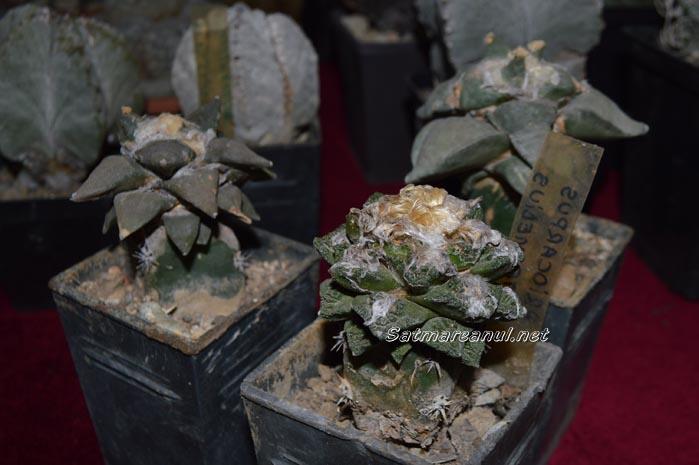 cactusi8