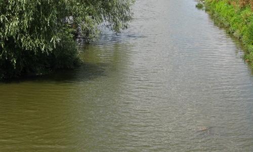Cod portocaliu de inundaţii la Satu Mare