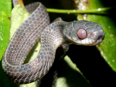 10 lucruri interesante despre serpi
