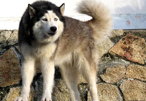 Proprietarul unui câine muşcător, scăpat datorită asigurării