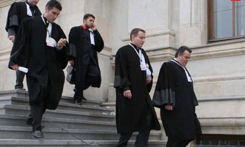 Cereri de refugiere în avocatură la Satu Mare