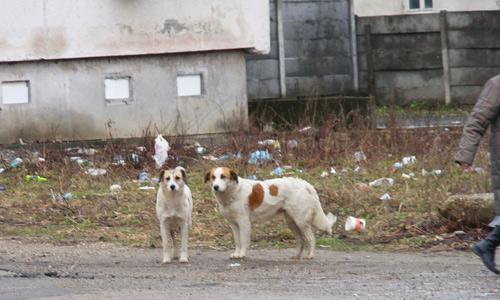 Câinele muşcă! … rău de tot, mai ales cel de Negreşti