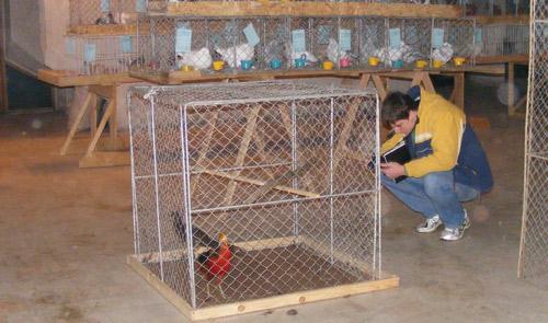 S-a deschis expoziţia de păsări şi animale mici