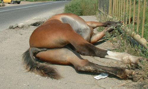 Doi cai frumoşi accidentaţi mortal de un microbuz