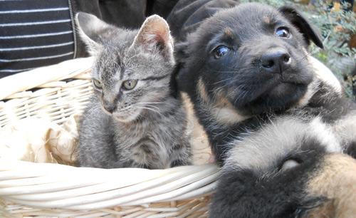 Târg de adopţii pentru căţei şi pisici