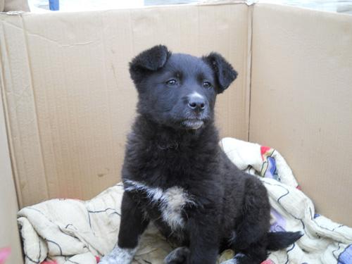 Un nou târg de adopţie a animalelor de companie