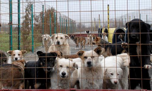 Câinii neadoptaţi vor fi eutanasiaţi dupa 10 zile