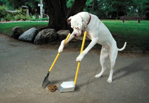 Amenzi usturătoare pentru sătmărenii care nu curăţă mizeria lăsată de câini