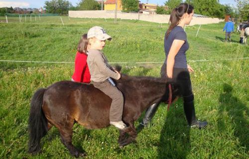 Înghesuială la cursurile gratuite de călărie