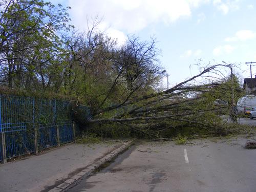 La copacul dărâmat