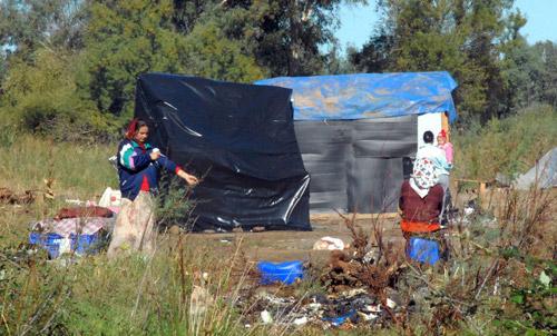 Focar de trichineloză la Medieș – 21 de persoane au ajuns la spital
