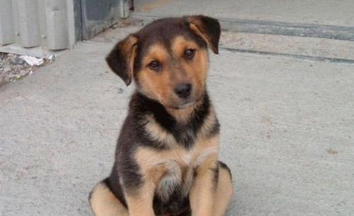 Centrul pentru Sterizarea Câinilor Comunitari va fi inaugurat joi