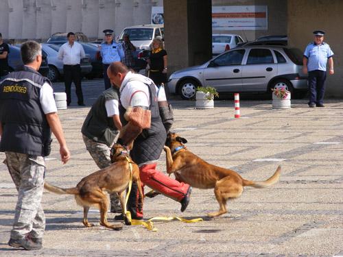 SHOW cu câini, împuşcături şi fumigene în Centrul Nou