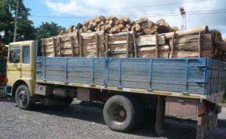 Documente pentru transport de material lemnos falsificate