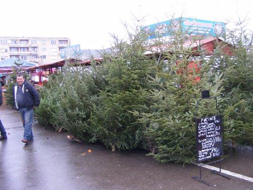 Concurență acerbă în rândul vânzătorilor de brazi de Crăciun