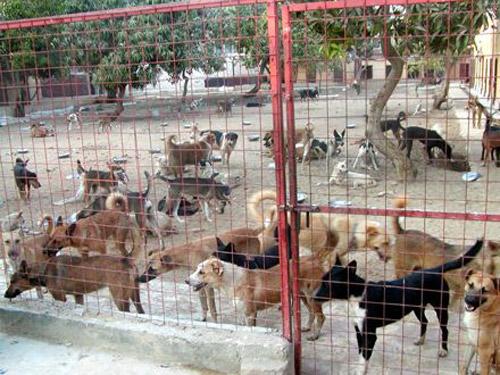 Azil pentru câini în cazarmă