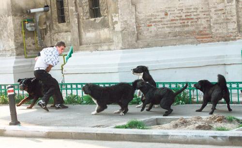 Muşcături de câini şi picioare rupte la UPU