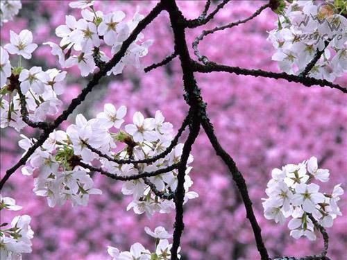 20 martie, prima zi a primăverii astronomice