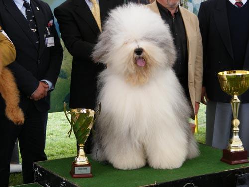 Jimmy este cel mai frumos câine de la CACIB Satu Mare 2012 (galerie foto)