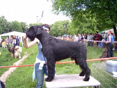 Concurs canin International Dog Show