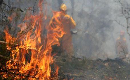 Cămârzana: 30 de hectare de pădure cuprinse de flăcări