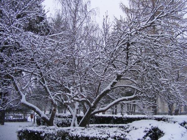 Iarna pune stapanire pe toata tara. Ce spun meteorologii