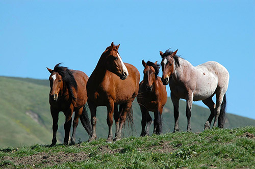 4 cai frumoşi din Polonia