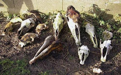 Zeci de cranii de cal găsite la Drăguşeni