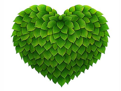 Împreună pentru inima verde a Sătmarului