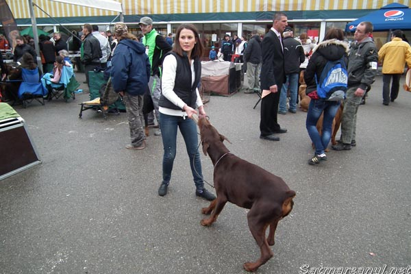 Dog Show și parada costumelor populare, în week-end, la Satu Mare