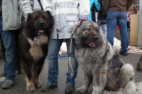 International Dog Show ediția cu numărul 36 (galerie foto)
