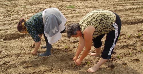Statul vrea să-i lase fără subvenţii pe micii fermieri