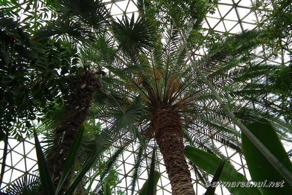 Am fost la Grădina Botanică din Jibou (fotoreportaj)