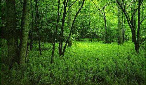 Lecţie în natură … despre natură