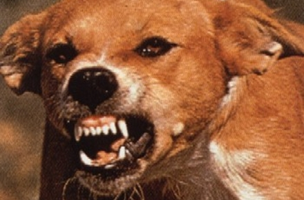 Câine turbat diagnosticat în Livada