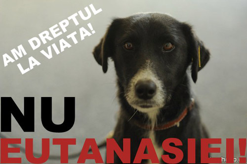 Miting împotriva eutanasierii câinilor fără stăpân, la Satu Mare