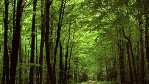 Două sătmărence s-au rătăcit în Pădurea Noroieni