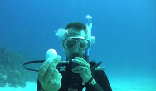 Vezi ce se întâmplă cu un ou spart sub apă, la mare adâncime