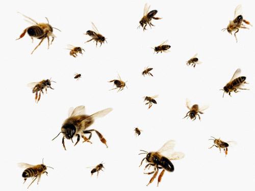 Protejaţi-vă albinele!
