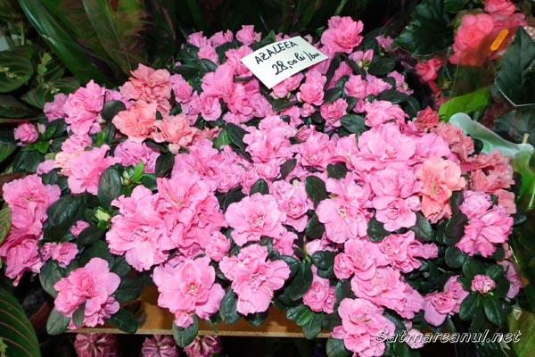 Fotoreportaj: Flori multe, cumpărători puţini de 8 martie